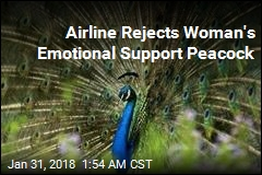 Airline Rejects Woman's Emotional Support Peacock