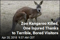 Zoo Kangaroos Weren't Active— So They Threw Bricks at Them