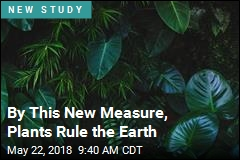 By This New Measure, Plants Rule the Earth