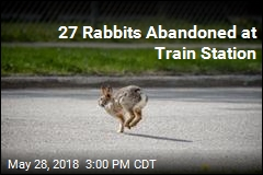 Reward Offered After 27 Rabbits Dumped at Train Station