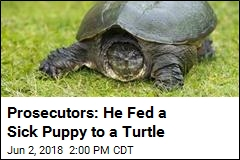 Idaho Teacher Who Fed Puppy to Turtle Charged With Cruelty