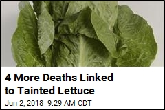 4 More Deaths Linked to Tainted Lettuce