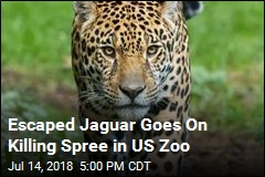 Jaguar Escapes, Goes On Killing Spree in US Zoo