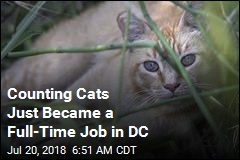 $1.5M Project Aims to Count All of DC's Cats