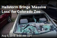 Hailstorm Brings 'Massive Loss' for Colorado Zoo