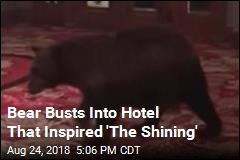 This Bear Has Something in Common With Stephen King