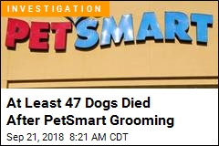 At Least 47 Dogs Died After PetSmart Grooming