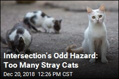 Weird Intersection Hazard: 100 Stray Cats