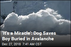 Rescue Dog Saves Boy Buried in Avalanche