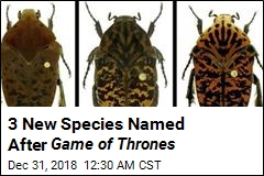 3 New Species Named After Game of Thrones