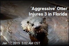 'Aggressive' Otter Injures 3 in Florida