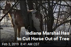 Indiana Marshal Has to Cut Horse Out of Tree
