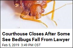 Courthouse Closes After Some See Bedbugs on Lawyer