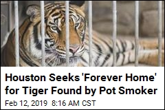 Houston Seeks 'Forever Home' for Tiger Found by Pot Smoker