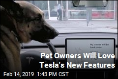 Pet Owners Will Love Tesla's New Features