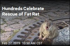 Hundreds Celebrate Rescue of Fat Rat