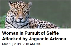 Woman in Pursuit of Selfie Attacked by Jaguar in Arizona