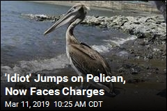 'Idiot' Jumps on Pelican, Now Faces Charges