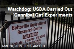 Watchdog: USDA Carried Out 'Cannibal Cat' Experiments