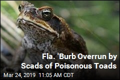 Fla. 'Burb Overrun by Scads of Poisonous Toads
