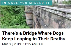 Inside the Mystery of Scotland's 'Dog Suicide Bridge'