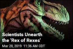 Scientists Unearth the 'Rex of Rexes'