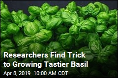 Scientists Discover Secret to Growing Tastier Basil