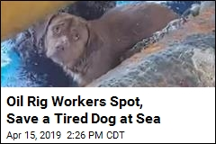 Lucky Dog Rescued 135 Miles From Shore