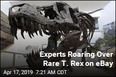 Experts Roaring Over Rare T. Rex on eBay