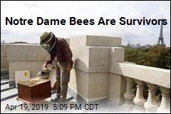 Notre Dame Bees Are Survivors