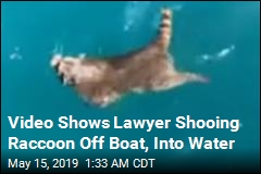 Video Shows Lawyer Shooing Raccoon Off Boat, Into Water
