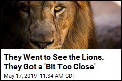 They Went to See the Lions. They Got a 'Bit Too Close'