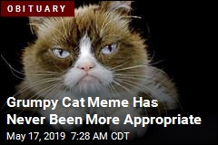 Grumpy Cat Meme Has Never Been More Appropriate