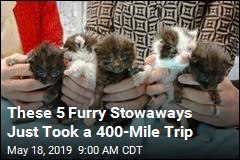 These 5 Furry Stowaways Just Took a 400-Mile Trip