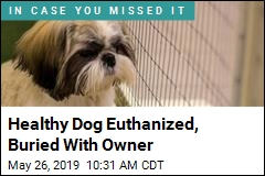 Healthy Dog Euthanized, Buried With Owner