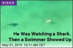 He Was Watching a Shark. Then a Swimmer Showed Up