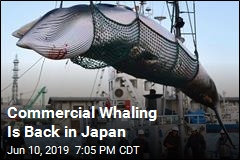 Despite Global Accord, Japan to Resume Commercial Whaling