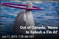 Out of Canada, 'News to Splash a Fin At'