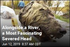 Alongside a River, a Most Fascinating Severed Head