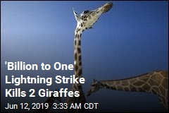 'Billion to One' Lightning Strike Kills 2 Giraffes