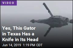 Yes, This Gator in Texas Has a Knife in Its Head