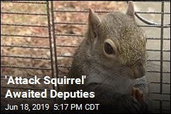 Deputies Encounter 'Attack Squirrel' During Bust