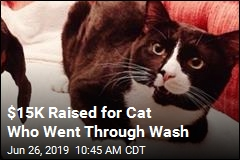 $15K Raised for Cat Who Went Through Wash