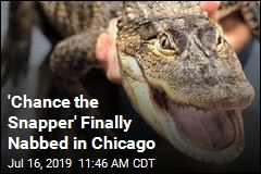 'Chance the Snapper' Finally Nabbed in Chicago