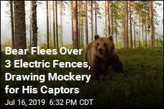 Groups Cheer On Bear That Fled By Climbing 3 Electric Fences
