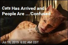 Best Reactions to the 'Bonkers' Trailer for Cats