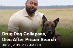 Drug Dog Collapses, Dies After Prison Search