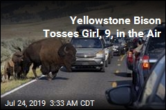 Yellowstone Bison Tosses Girl, 9, in the Air