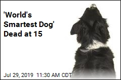 'World's Smartest Dog' Dead at 15