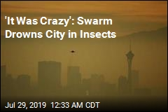 'The Swarm' Hits Vegas